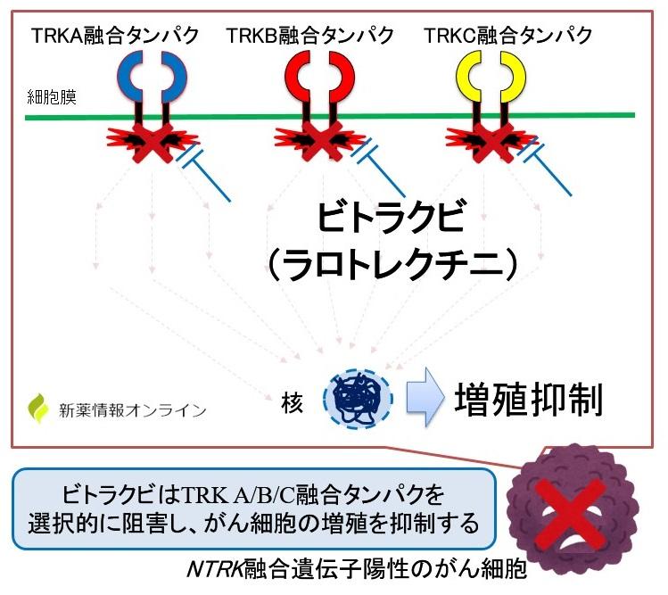 ビトラクビ(ラロトレクチニブ)の作用機序:TRK阻害