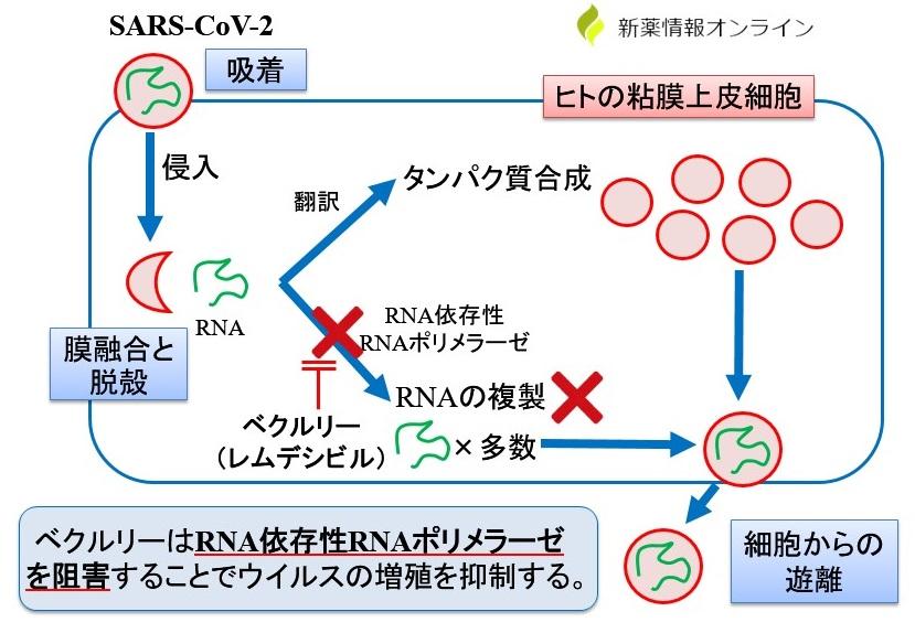 ベクルリー(レムデシビル)の作用機序:RNAポリメラーゼ阻害