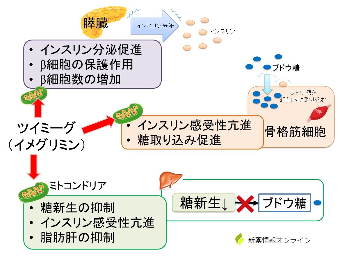 ツイミーグ(イメグリミン)の作用機序:ミトコンドリア機能改善
