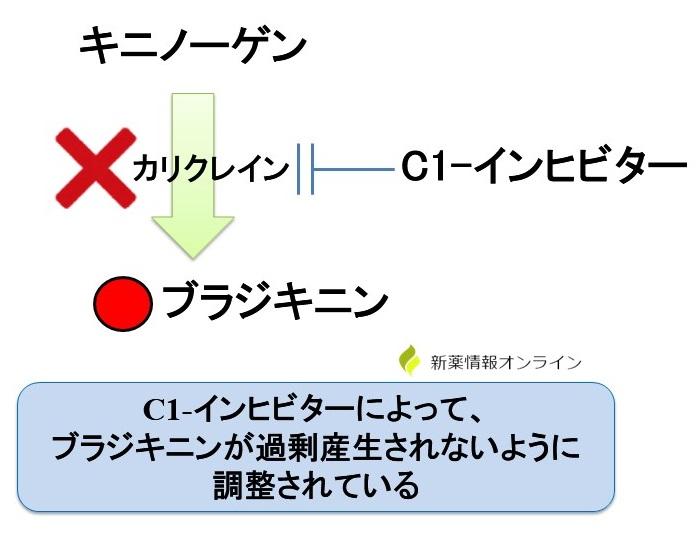 遺伝性血管性浮腫(HAE)の原因:C1-インヒビターの関与が重要
