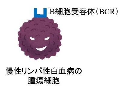 慢性リンパ性白血病(CLL)とBCR