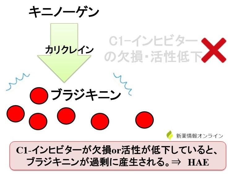 HAEの発症はC1-インヒビター欠損による