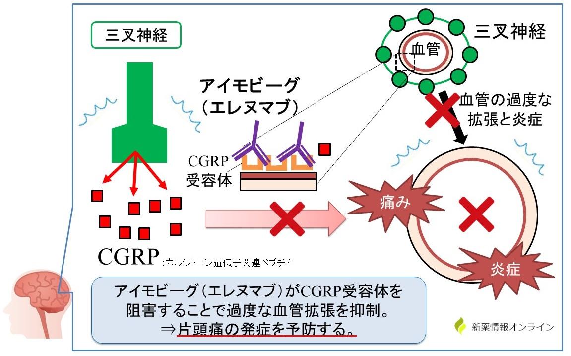 アイモビーグ(エレヌマブ)の作用機序:抗CGRP受容体抗体製剤