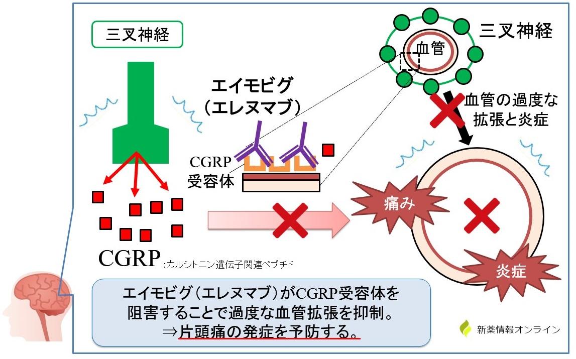 エイモビグ(エレヌマブ)の作用機序:抗CGRP受容体抗体製剤