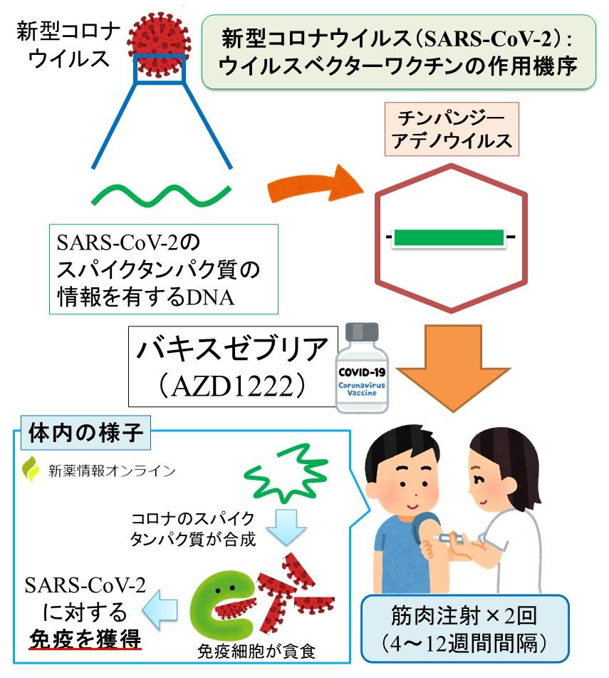 バキスゼブリア筋注(AZD1222)の作用機序:ウイルスベクターワクチン