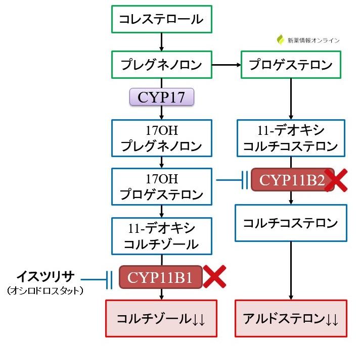 イスツリサ(オシロドロスタット)の作用機序:CYP11B1とCYP11B2阻害