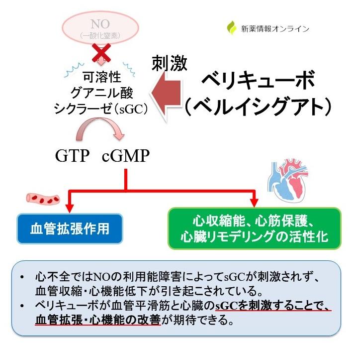 ベリキューボ(ベルイシグアト)の作用機序:可溶性グアニル酸シクラーゼ(sGC)刺激薬