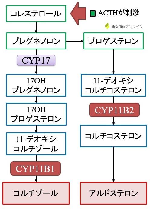 コルチゾールの生合成経路:コレステロール→プレグネノロン→11-デオキシコルチゾール