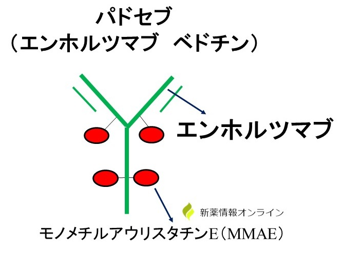 パドセブ(エンホルツマブベドチン)の構造