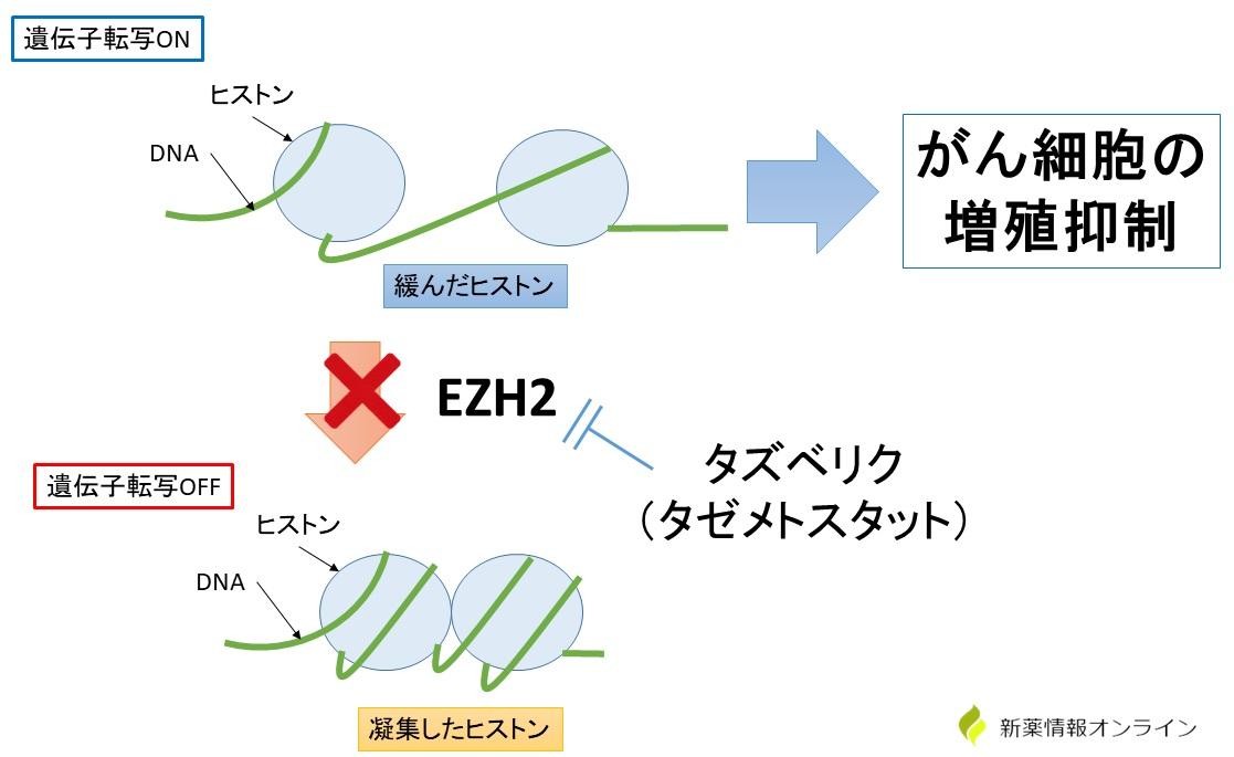 タズベリク(タゼメトスタット)の作用機序:EZH2阻害薬(経口投与可能)