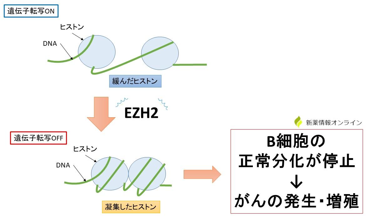 EZH2遺伝子異常とエピジェネティクス