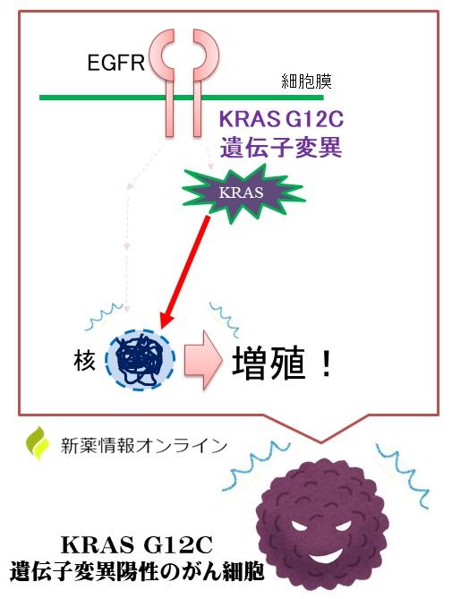 KRAS G12C遺伝子変異陽性のがん細胞