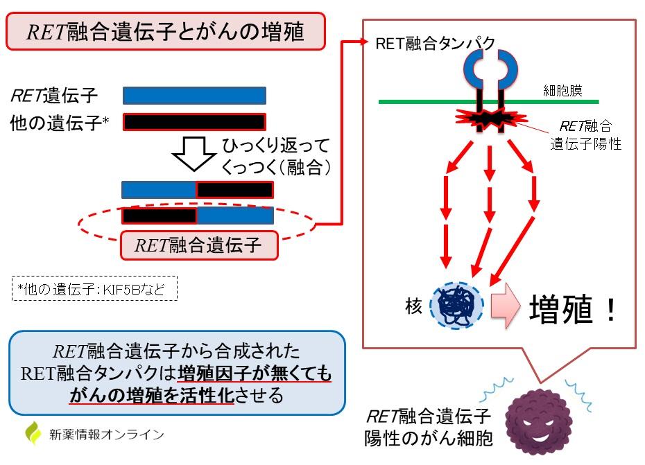 RET融合遺伝子とは?肺がんではRET-KIF5B融合が多い