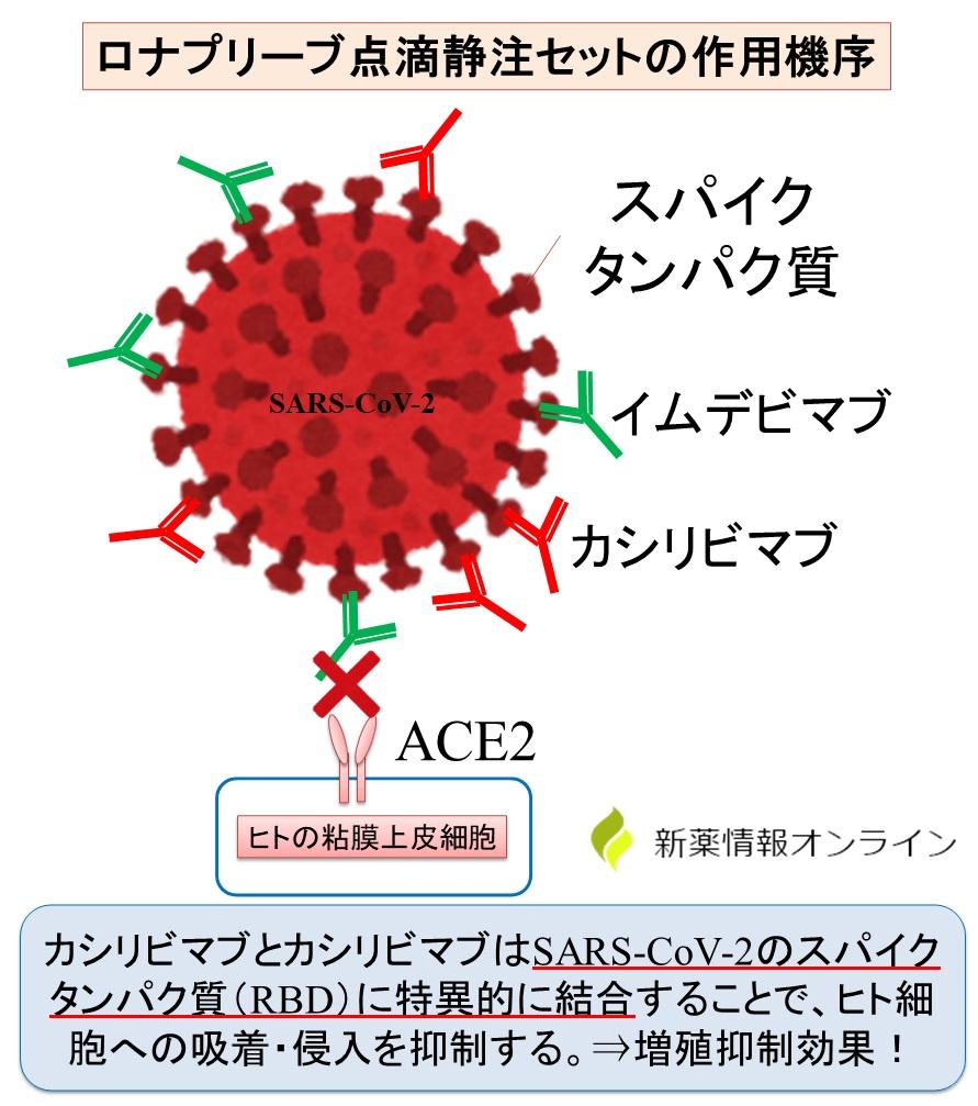 ロナプリーブ点滴静注(カシリビマブ+イムデビマブ)の作用機序:抗RBD抗体で、ACE2との結合を阻害することで新型コロナウイルスの増殖抑制効果を発揮する抗体カクテル療法