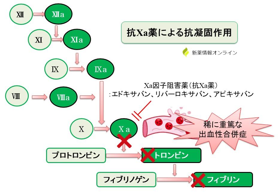 DOAC(抗Ⅹa因子阻害薬)使用による出血リスク:リクシアナ(一般名:エドキサバン) ▸イグザレルト(一般名:リバーロキサバン) ▸エリキュース(一般名:アピキサバン)
