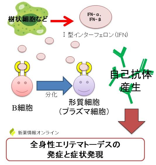 全身性エリテマトーデス(SLE)の発症とⅠ型インターフェロン(IFN-α,β)の関わり