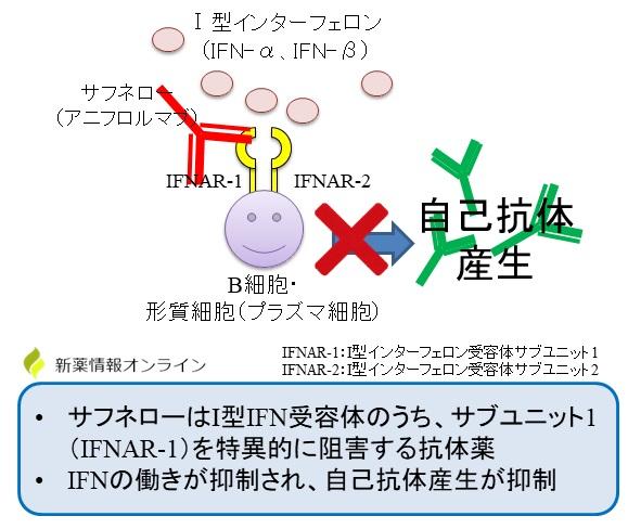 サフネロー(アニフロルマブ)の作用機序:抗IFNAR-1抗体