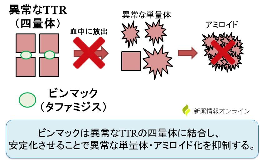 ビンマック(タファミジス)の作用機序:TTR四量体安定化