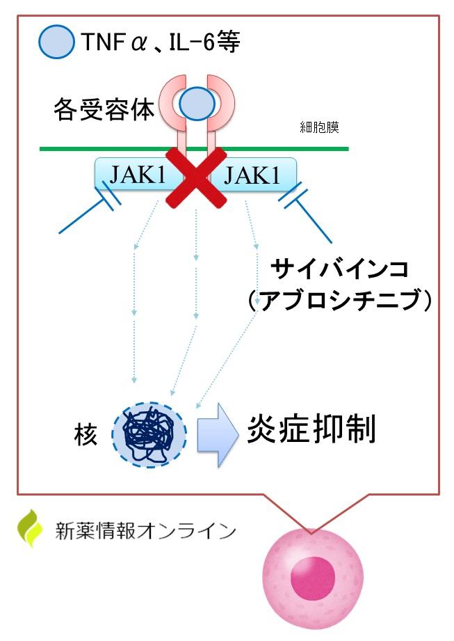サイバインコ(アブロシチニブ)の作用機序:JAK1阻害薬