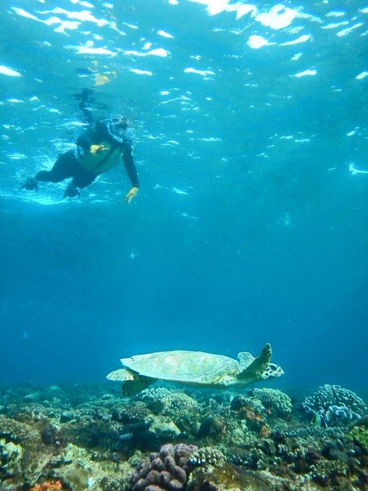沖縄の海でシュノーケリング:ウミガメにも会える!